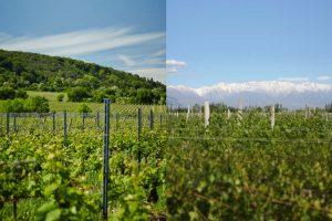 Wo Wein Welten verbindet