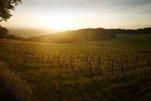 Wo Wein in einer Metropolregion wächst