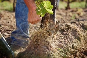 Wo Nachhaltigkeit und Weinbau kein Widerspruch sind